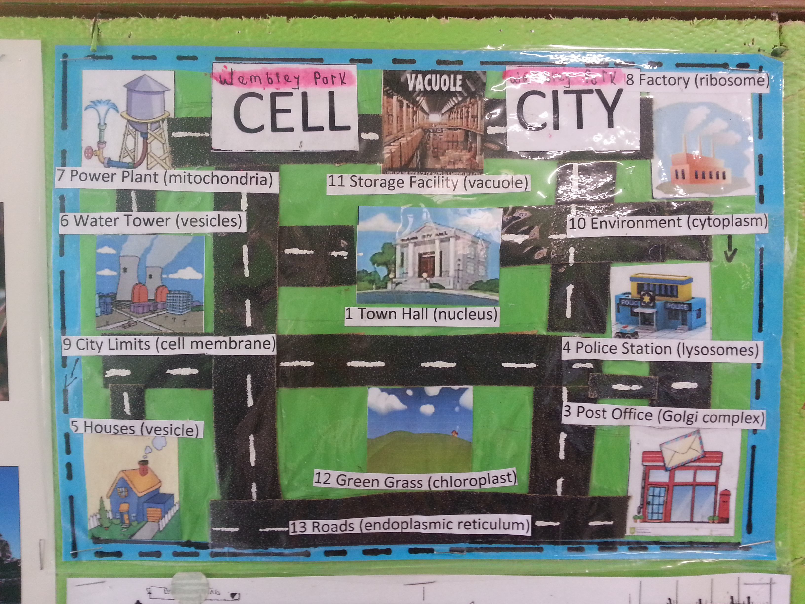cell city | pbhslifescience