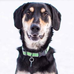 Small Of Beagle Husky Mix