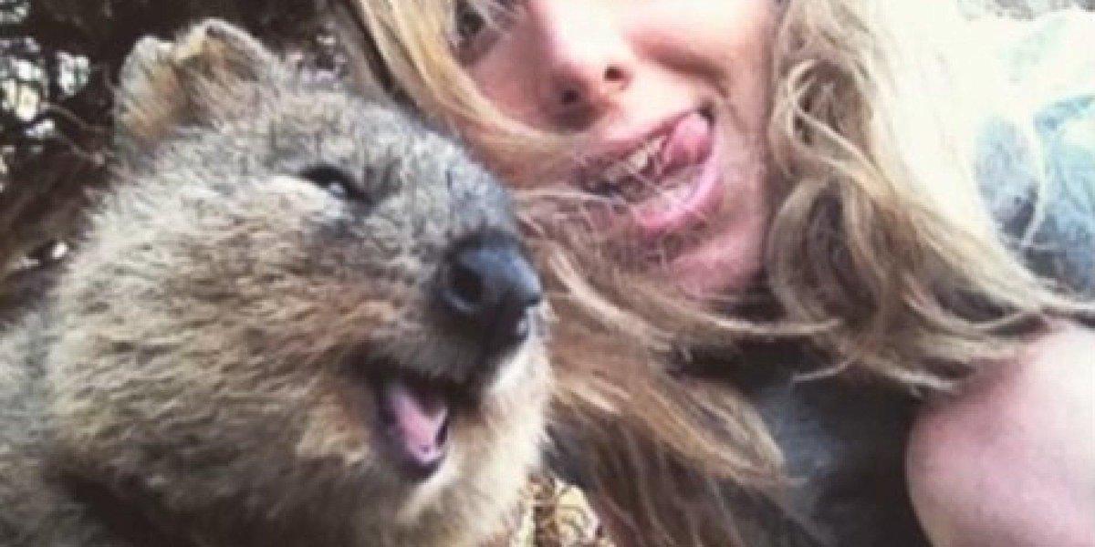 Cute Girl Smiling Wallpaper Quokka Selfies Are The Cutest Selfies Scoopnest Com