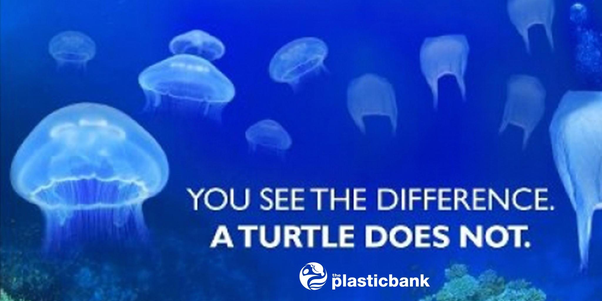 Plastikbank Plastic Bank On Twitter Quotvarious Marine Animals And