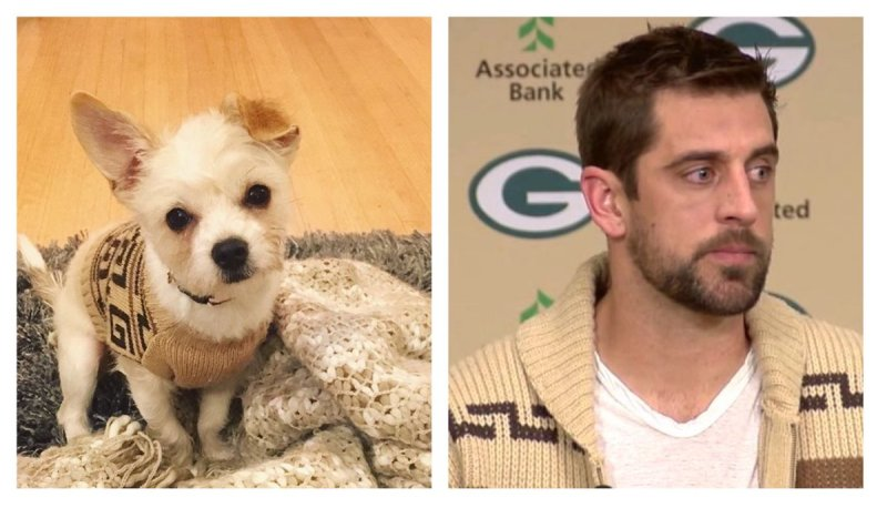 Large Of Aaron Rodgers Dog