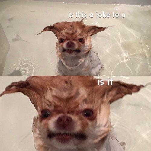 Medium Crop Of How Often Should You Bathe Your Dog