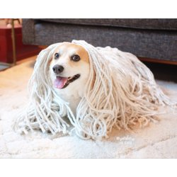 Small Crop Of Dog That Looks Like A Mop