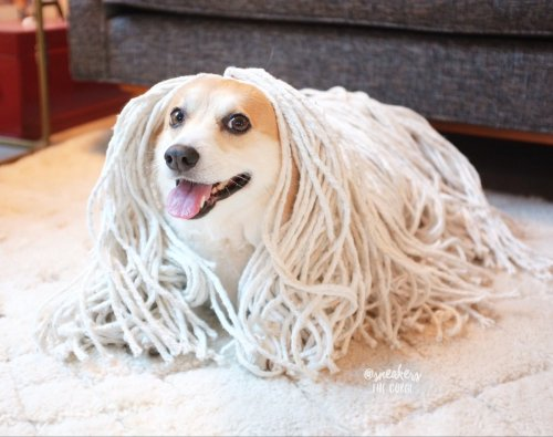Medium Of Dog That Looks Like A Mop