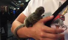 Anthony Davis Has A Pet Monkey Named Meek