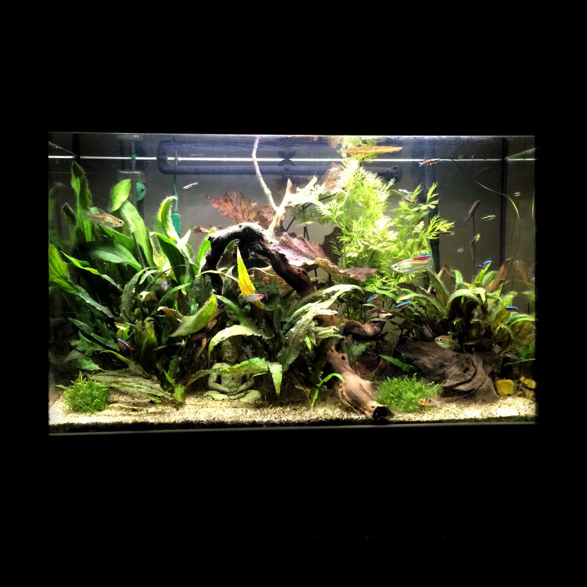 Aquatlantis Easy Led Verlichting Aquatlantis Hashtag On Twitter