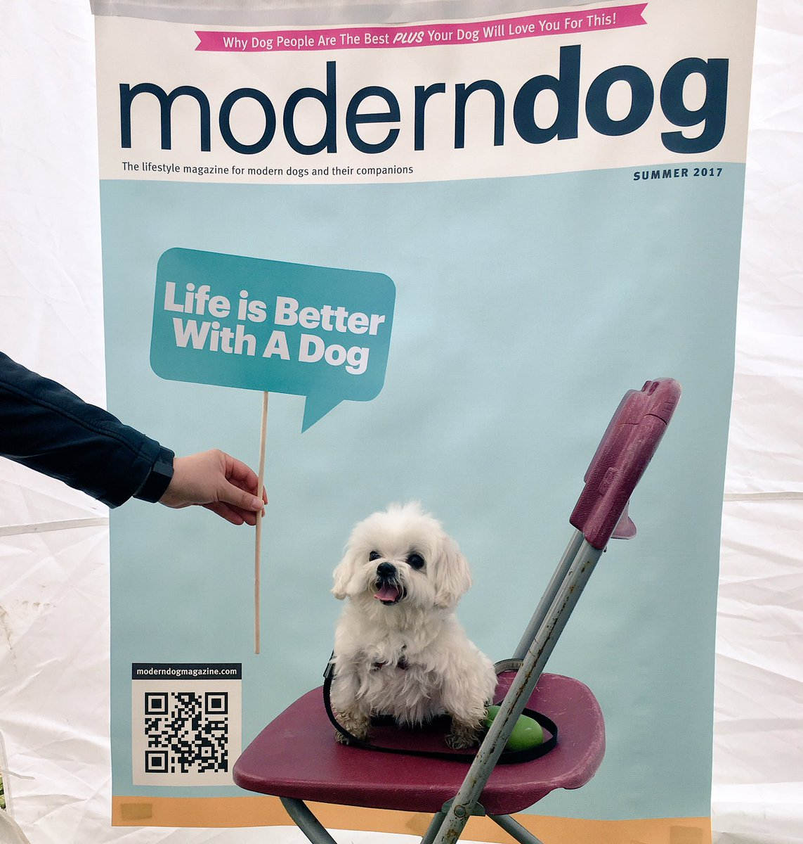 Snazzy Dog Magazine On Selfie Station At Festivalfor Dogs Is Seeing Some Real Dog Magazine On Selfie Station At Dog Magazine Canada Dog Magazinehsus bark post Modern Dog Magazine