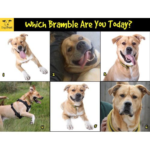 Medium Crop Of Funny Dog Faces