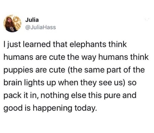 Medium Of Do Elephants Think Humans Are Cute