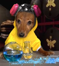 #dachshund hashtag on Twitter