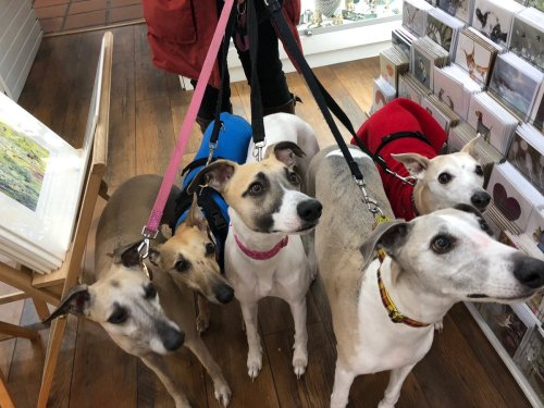 Medium Of Breed And Co