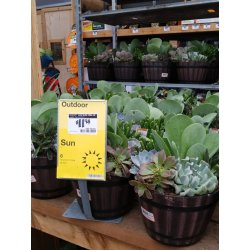 Small Crop Of Succulents Home Depot