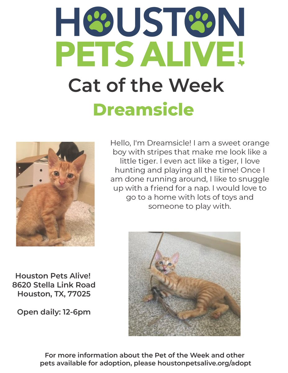 Fantastic You Can Find Out More About M Our Adoptable Pets Houston Pets Alive Twitter Houston Pets Alive Jobs Houston Pets Alive Dogs All bark post Houston Pets Alive