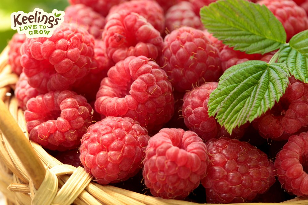 Raspberries Are Rich In Folate Which Can Help To Regulate