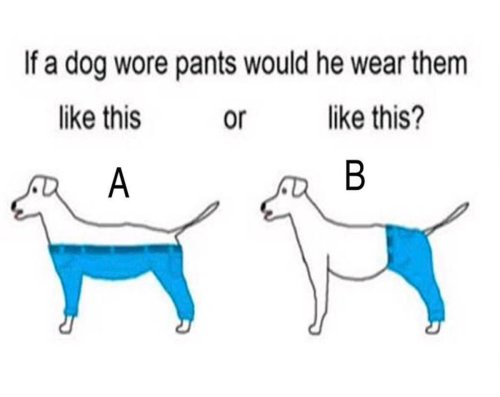 Medium Of If A Dog Wore Pants