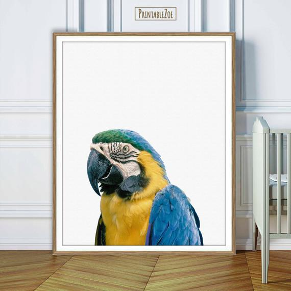 ParrotDecor tagged Tweets and Download Twitter MP4 Videos Twitur