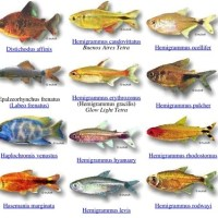 names of fish - List of Fish Names