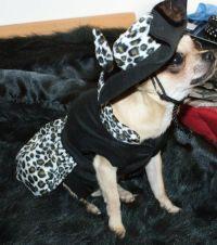 Dog-Fashion-Boutique (@DogFashionLine) | Twitter