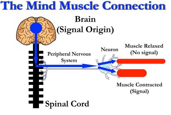 Turning Up the Mind-Muscle Connection PCC Blog