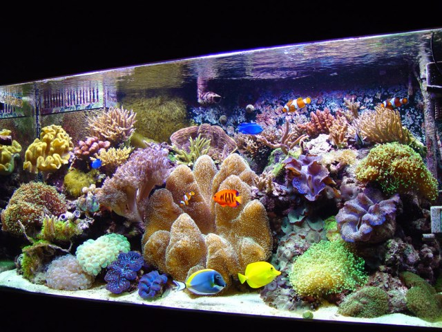 Seal Beach Fish Tank Maintenance Services by PCH Tanks