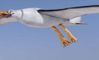 Nivea-Seagull