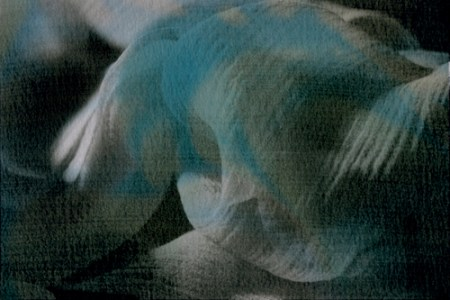 Placid, 2009 Mixed Media: Digital & Liquid Emulsion © Jennifer Brendicke