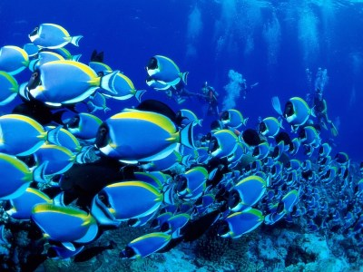 Cool Underwater Wallpapers | PCTechNotes :: PC Tips, Tricks and Tweaks