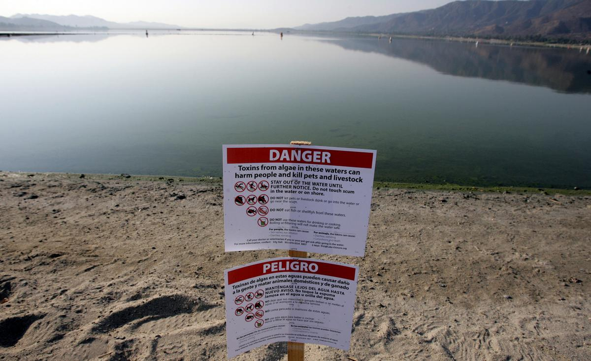 Pull And Bear Mesa Y Lopez Lake Elsinore Shutdown Due To Blue Green Algae A Big