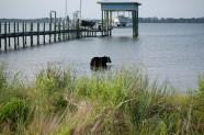 Black-Bear-rescue