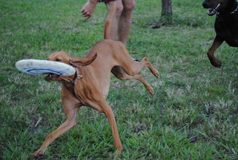 sadie dog park 015