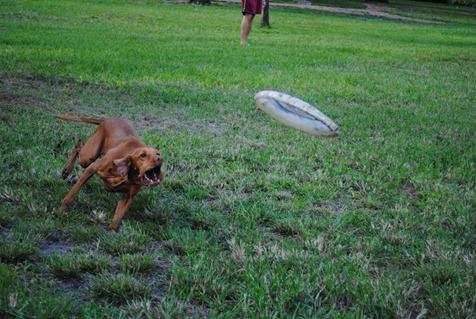 sadie dog park 017