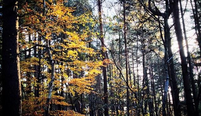 Autumn on Diamond Ridge