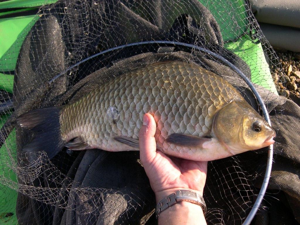Laube la pêche le domaine de Nizhniy Novrogod
