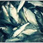 La pêche au feeder des petits poissons