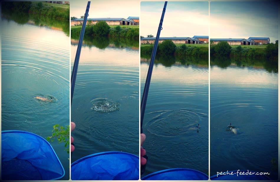 La truite les rapports sur la pêche