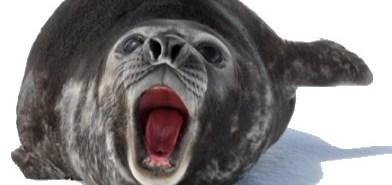 Barking Seal