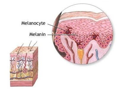 Difference Between Keratinocytes and Melanocytes Definition - Keratinocytes