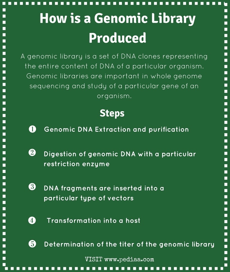How is a Genomic Library Produced - PediaaCom