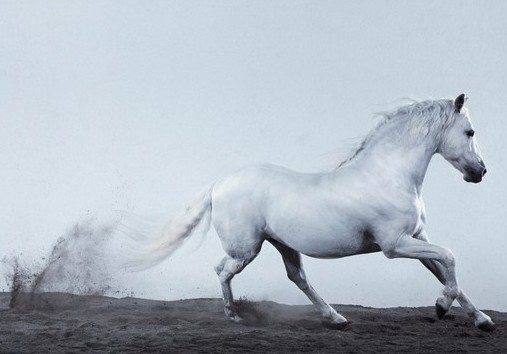 Jill Greenberg - Horses (book)