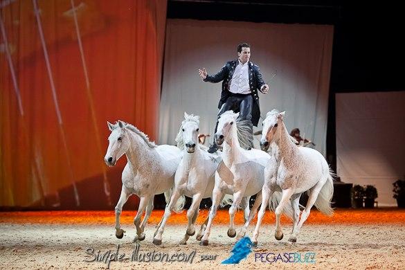 Gala des Crinières d'Or 2013 : Lorenzo