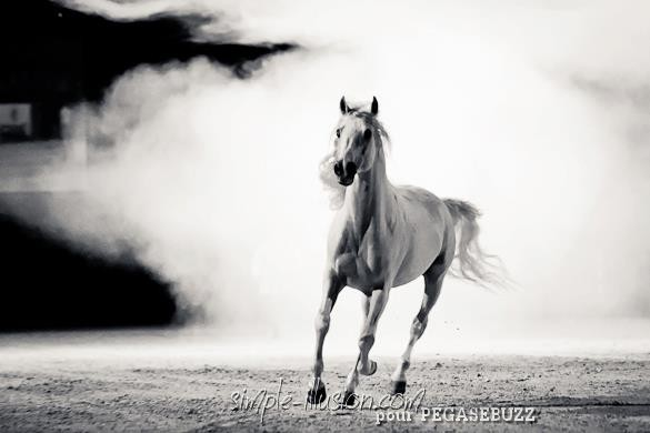 Gala Equisud 2013 : L'Alchimie Equestre de Mario Luraschi