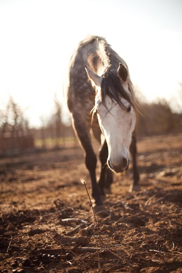 Ryan Scheer : Horse