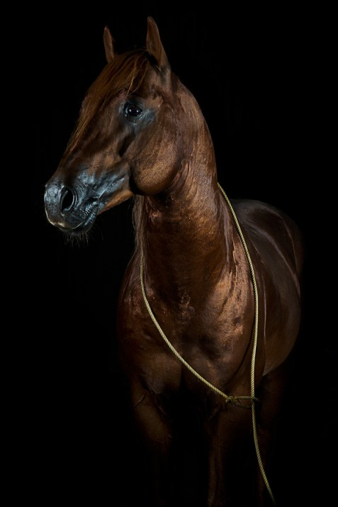 Equine portraits by Jörn Reiter