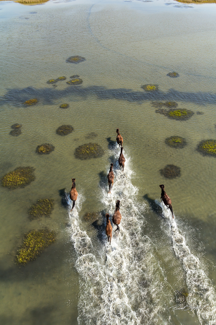 Wild Horses of Shackleford Banks by Brad Styron