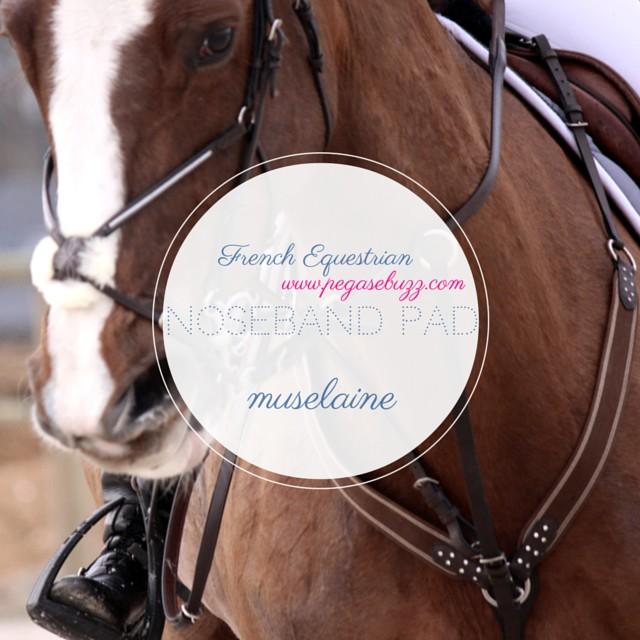 www.pegasebuzz.com | French Equestrian by Roxanne Legendre