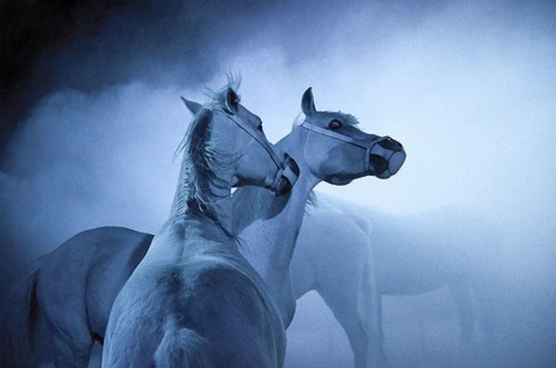 www.pegasebuzz.com   Equestrian photography : Ilja Holodkov