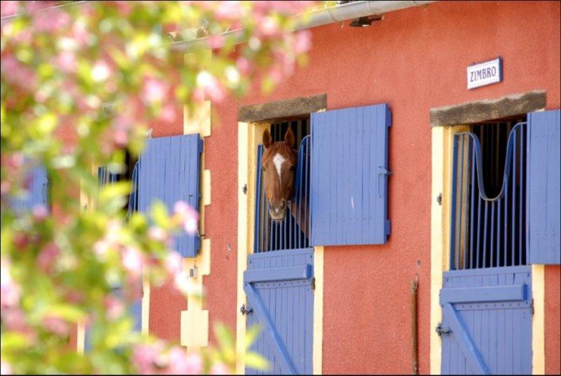www.pegasebuzz.com | Dream barn : Equimov presents Ecurie de Blanzac.