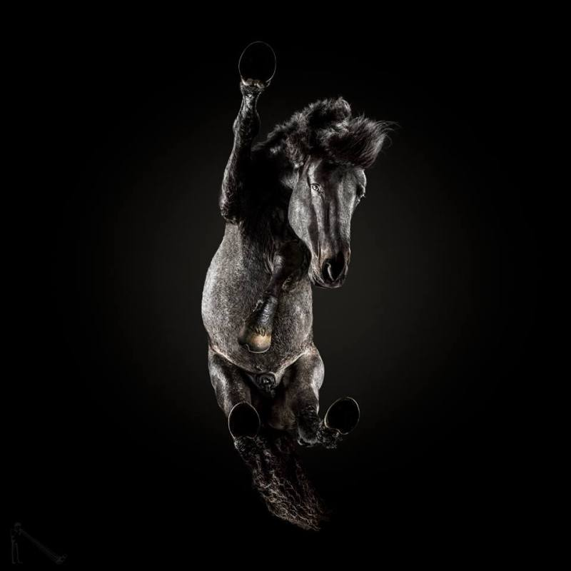 www.pegasebuzz.com | Equestrian photography : Andrius Burba - Underlook horses.