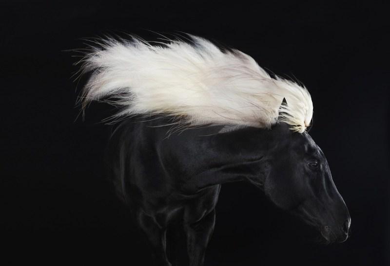 www.pegasebuzz.com | Equestrian photography : Tamaki Yoshida - Equus