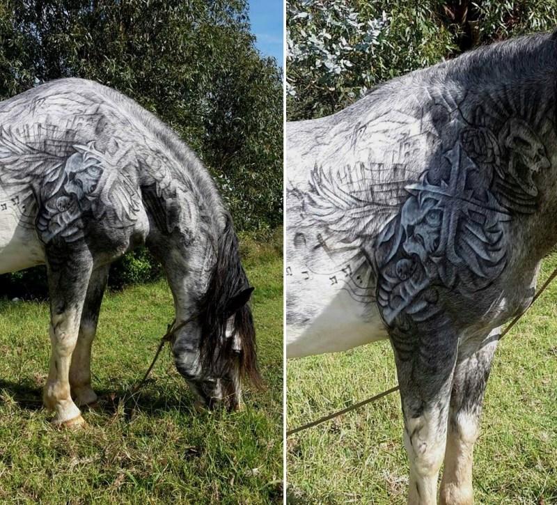 www.pegasebuzz.com   Equestrian lifestyle : Benjamin Lloyd tattooing a horse